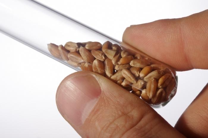 seed test tube